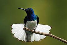 I love birds / by Lenora S Davis