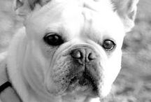 Fiffibene Hundeblog / Fiffibene - ein Leben mit Hund: Im Hundeblog findet ihr Informationen, News, Buchtipps, Erfahrungen, Kontroverses, leckere Rezepte und Tipps zur Hundeernährung, zu Gesundheit, Spiel und Spaß, der Hund-Mensch-Beziehung, Expertenbeiträge, Videos und Gastbeiträge von Journalisten und Buchautoren u.v.m. Schaut vorbei und lernt Wilma, den Blogwildfang kennen: Let the dogs rock the world!