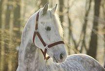 Horses. / Лошади.