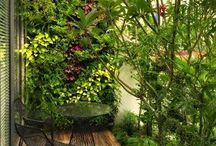 Növényzet