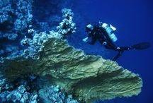 Ägypten – Sharm el Sheikh / More Diving: www.snippetsofatraveller.de