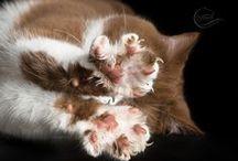 Cats / by Natalia Rafati