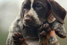 Bark - Doggy Friends