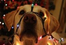 Healthy Pets Christmas