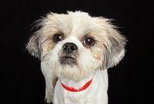 Pets Up For Adoption in Utah / Adoptable pets in Utah!