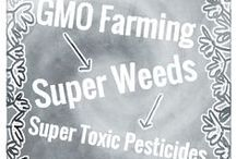 NO to GMOs (YES to Labeling) / GMOs have introduced many more pesticides into our food supply. Know what you're buying. Know what you're eating. Take a stand and demand GMO labeling. It's our right to know. / by Northwest Center for Alternatives to Pesticides