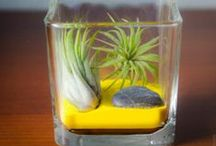 Air Plant Ideas / Air plant ideas that are design-forward, unique and fun! Great for home or office decor.