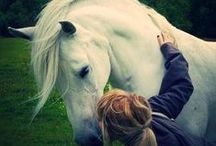 Horses! / by Tori Moats
