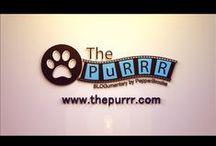 Pepper's Blog - The PuRRR.com / My experiences. My opinion. My Triumphs. My Blog. It's my written documentary.