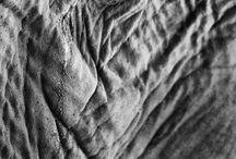 elephantasy•