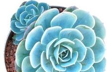 Coenrad + Louise Get Hitched / Beach, succulent theme
