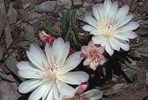 Art Floral / flor en tierra