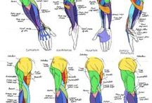 anathomy, proportions (human) / individual parts of human body
