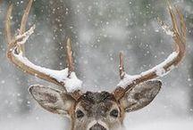 Winter holidays / #Winter #New_year #Christmas #december