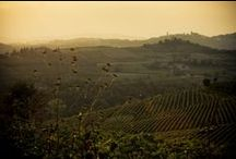 Barbera Landscapes / In the Monferrato district, the vine and wine are not just one of the main sources of wealth, but also an expression of culture and tradition, fruit of a tenacious attachment to the land and centuries of hard work, required to implement an exceptionally extensive agricultural transformation.