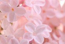 color : pink