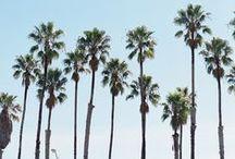 California Dreamin'