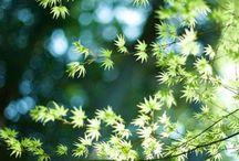 木漏れ日(美しい日本語)