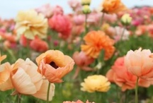 friday's flowers / by Rachael Parry