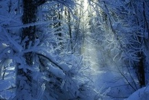 Winter In All It's Glory ✵ / Magical Winter / by ★~ CelestialSkye  Kat ~ ★