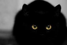 Black Cats Bring You GOOD *Luck * / My love affair with the little mischievous, cute, and most of all loving black cats. Three have been in my heart and life. Bringing me company in my loneliness. / by ★~ CelestialSkye  Kat ~ ★