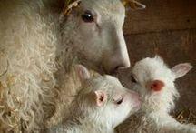 Les laines, mèches, fibres, teintures / wool, fiber, dye, dying, texture, etc;