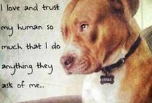 perros con corazón
