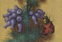 libros de vegetabilibus,растения,Medieval Manuscripts botanical