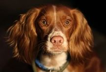 Dog Friendly / We wholeheartedly welcome dogs to the Crewe. 11 of our 21 rooms are suitable for dog stays. We even have a boot room for a wash and brush up after exploring the local moors, river and forests. Front of House guru, Richard, is our resident dog photographer. Seek him out!