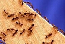 Pests / by Jackie Hood