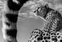 wild / by Maiara Sant'ana