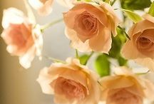 Flowers - Roses / by Monica Bourne