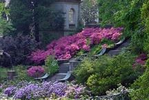 yard and garden / by Nancy McLaren