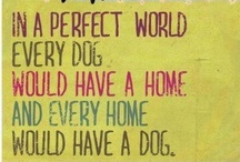 ALL THINGS DOG / Dog Products. Projects For Dogs. Funny Things MY Dogs Have Done Or Would Do. / by Nancy Pentecost
