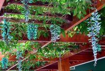Flores, plantas e jardins / Flores e plantas que dão vida e decoram nossas casas.Ideias de decoração com flores e plantas pra interiores e exteriores.