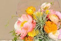 - A+T // 9.12.15 - / LBJ Wildflower Center Wedding Design  / by Emily Leach
