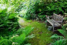 Garden love / tips tricks n inspiration for my home park..