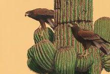 Original Acrylic Paintings / Original acrylic paintings by wildlife artist Nancy Tome.