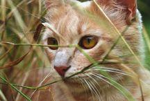 Suburban Cats