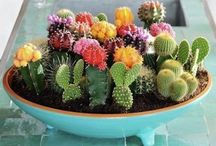 Green thumb / My healthy obsession with cacti & succulents