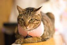 Boutique pour Chat / Oh ! Pacha est une boutique en ligne proposant des produits pour chiens et chats originaux et branchés. http://www.ohpacha.com