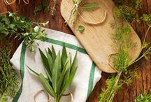 Growing veggies & herbs / Dyi