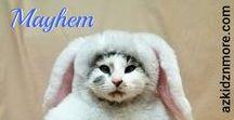 Mayhem ~ Holidayz! / My Kitty ~ Mayhem He goes to work everyday and greets most people, unless it's cat nap time.  #workingcat #workingkitty #cutestcat #cutestkitty #mayhem