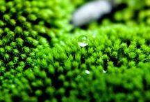 zöld / szív csakra