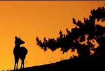 Napnyugta sziluett / naplemente árnykép