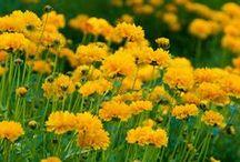 Növényeink / kertünk virágai ,gondozása