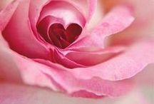 Rózsás