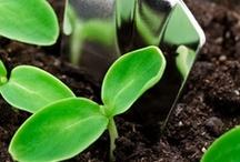 Kertészet / Kreatív  ötletek, Kertészkedés. Kerttervezési tippek...