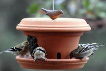 Little birdies in my garden