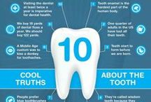 Fun Dentist Facts / Learn more about how to keep a healthy smile your whole life through!